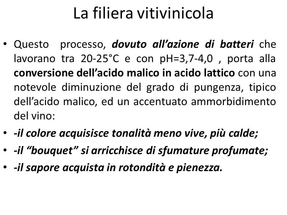 La filiera vitivinicola Questo processo, dovuto all'azione di batteri che lavorano tra 20-25°C e con pH=3,7-4,0, porta alla conversione dell'acido mal