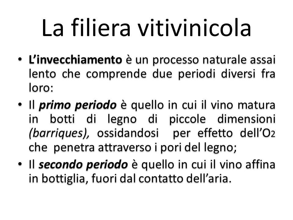 La filiera vitivinicola L'invecchiamento è un processo naturale assai lento che comprende due periodi diversi fra loro: Il primo periodo è quello in c