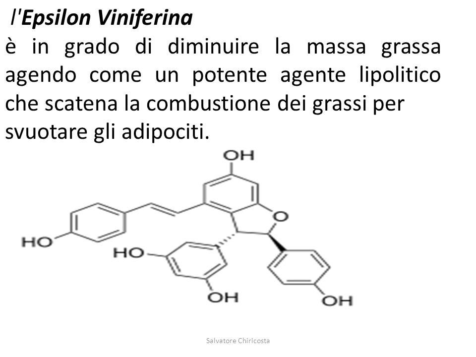 l'Epsilon Viniferina è in grado di diminuire la massa grassa agendo come un potente agente lipolitico che scatena la combustione dei grassi per svuota