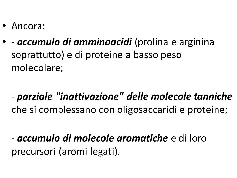 Prodotti e sottoprodotti della filiera vitivinicola Ancora: - accumulo di amminoacidi (prolina e arginina soprattutto) e di proteine a basso peso mole