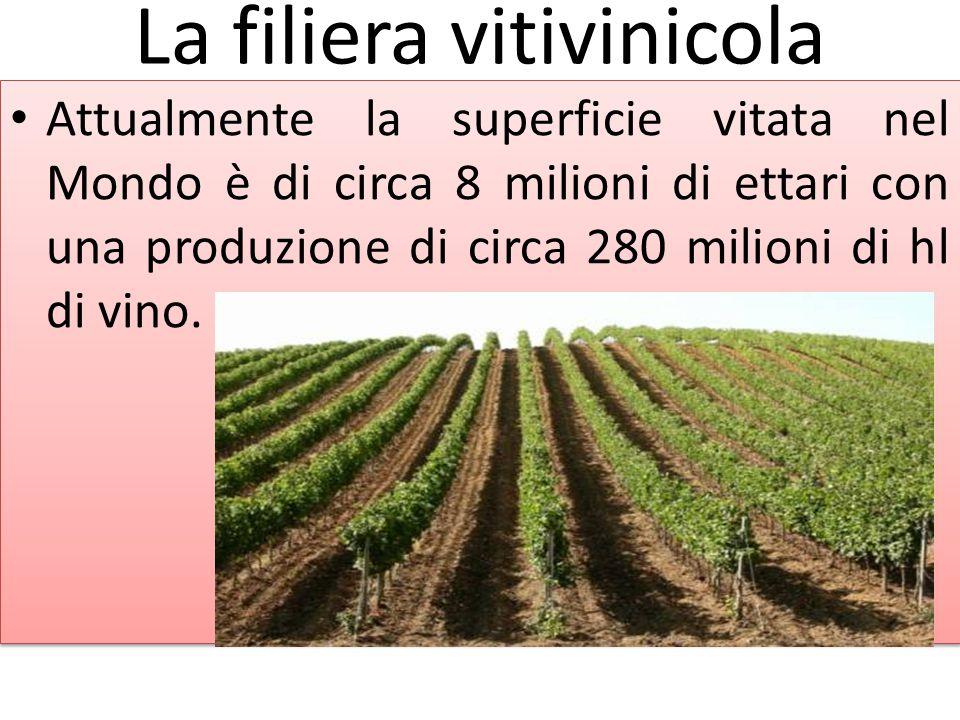 La filiera vitivinicola Attualmente la superficie vitata nel Mondo è di circa 8 milioni di ettari con una produzione di circa 280 milioni di hl di vin