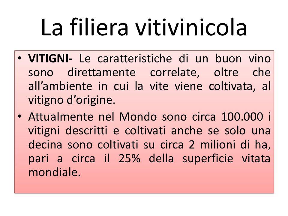 La filiera vitivinicola VITIGNI- Le caratteristiche di un buon vino sono direttamente correlate, oltre che all'ambiente in cui la vite viene coltivata