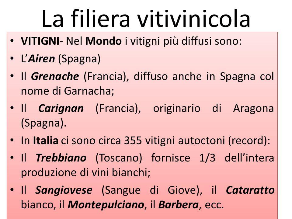 La filiera vitivinicola VITIGNI- Nel Mondo i vitigni più diffusi sono: L'Airen (Spagna) Il Grenache (Francia), diffuso anche in Spagna col nome di Gar