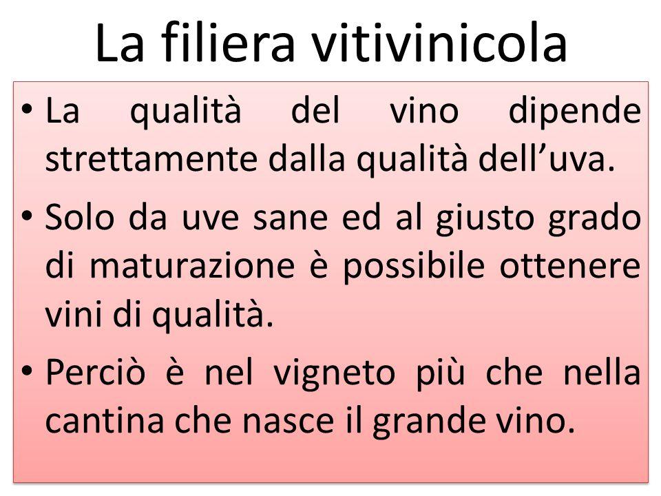 La filiera vitivinicola La qualità del vino dipende strettamente dalla qualità dell'uva. Solo da uve sane ed al giusto grado di maturazione è possibil
