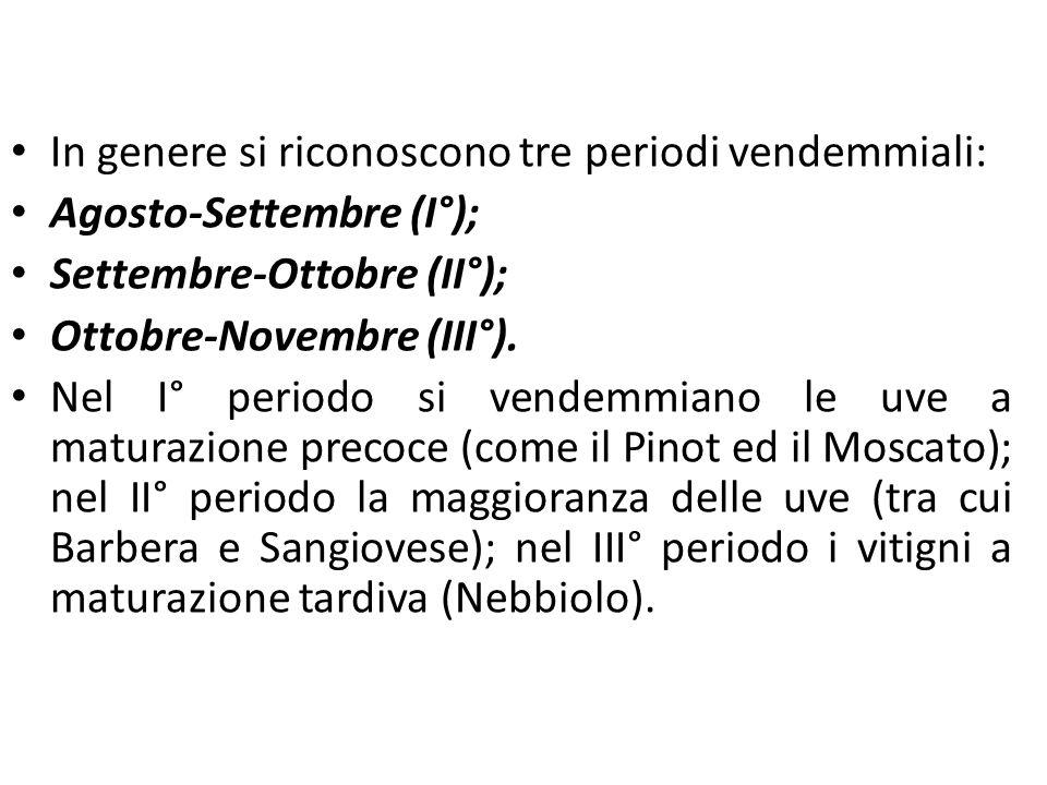 La filiera vitivinicola In genere si riconoscono tre periodi vendemmiali: Agosto-Settembre (I°); Settembre-Ottobre (II°); Ottobre-Novembre (III°). Nel