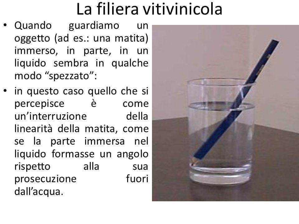 """La filiera vitivinicola Quando guardiamo un oggetto (ad es.: una matita) immerso, in parte, in un liquido sembra in qualche modo """"spezzato"""": in questo"""