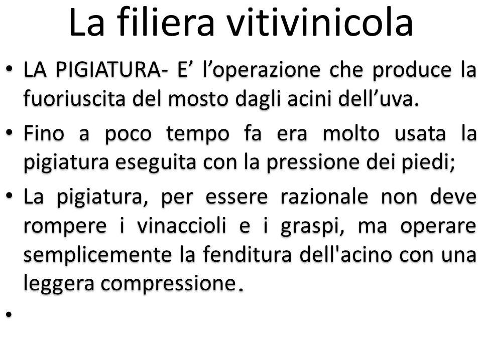 La filiera vitivinicola LA PIGIATURA- E' l'operazione che produce la fuoriuscita del mosto dagli acini dell'uva. Fino a poco tempo fa era molto usata