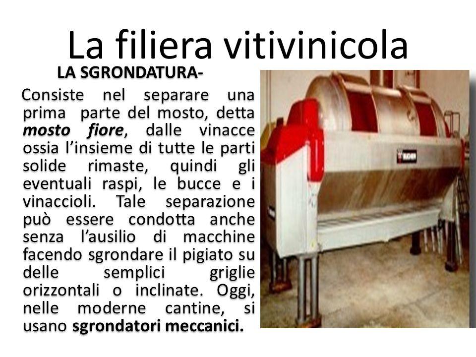 La filiera vitivinicola LA SGRONDATURA- Consiste nel separare una prima parte del mosto, detta mosto fiore, dalle vinacce ossia l'insieme di tutte le