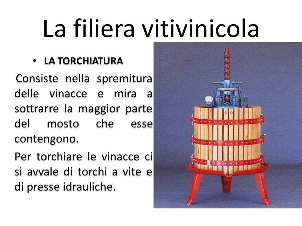 La filiera vitivinicola LA TORCHIATURA Consiste nella spremitura delle vinacce e mira a sottrarre la maggior parte del mosto che esse contengono. Per