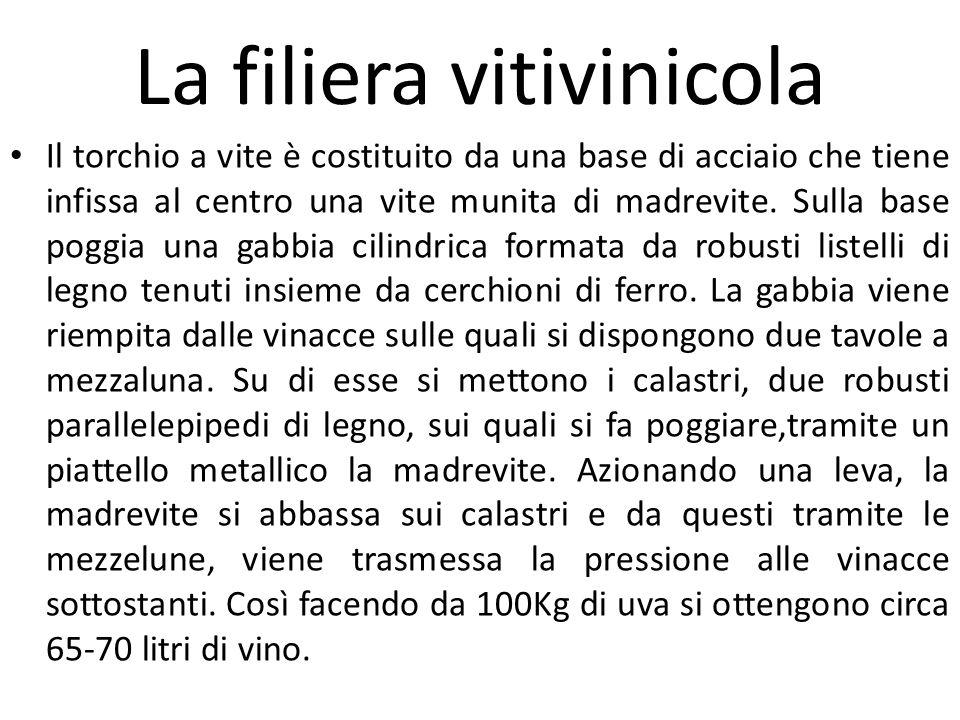 La filiera vitivinicola Il torchio a vite è costituito da una base di acciaio che tiene infissa al centro una vite munita di madrevite. Sulla base pog
