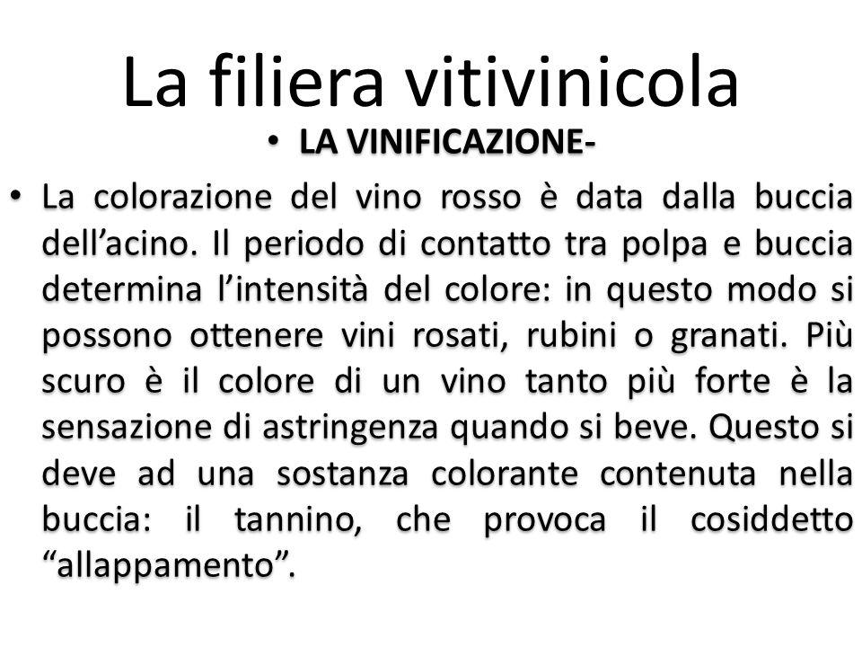 La filiera vitivinicola LA VINIFICAZIONE- La colorazione del vino rosso è data dalla buccia dell'acino. Il periodo di contatto tra polpa e buccia dete