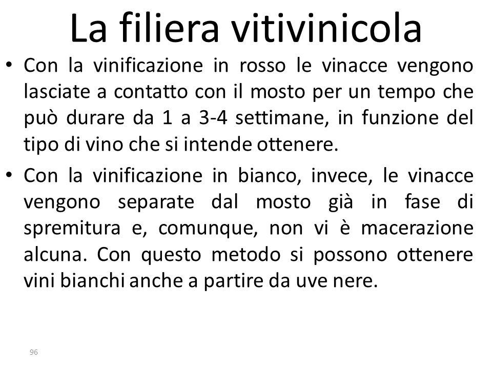 La filiera vitivinicola Con la vinificazione in rosso le vinacce vengono lasciate a contatto con il mosto per un tempo che può durare da 1 a 3-4 setti