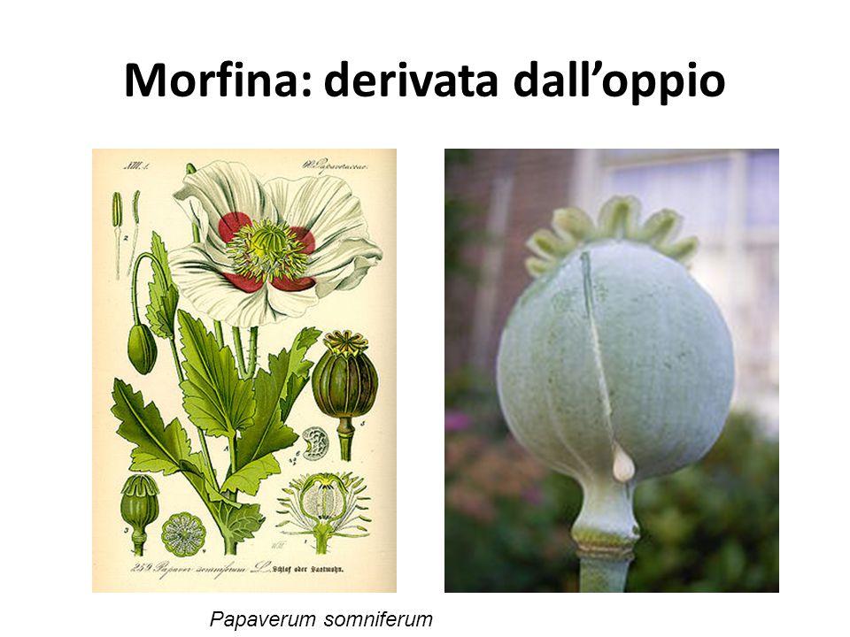 Morfina: derivata dall'oppio Papaverum somniferum