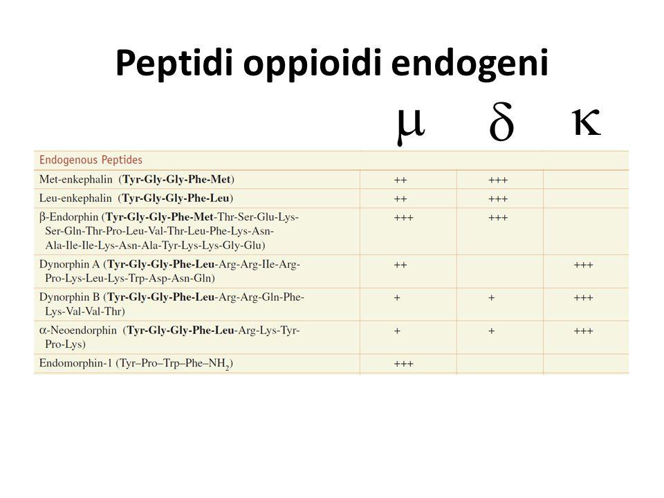 Peptidi oppioidi endogeni   