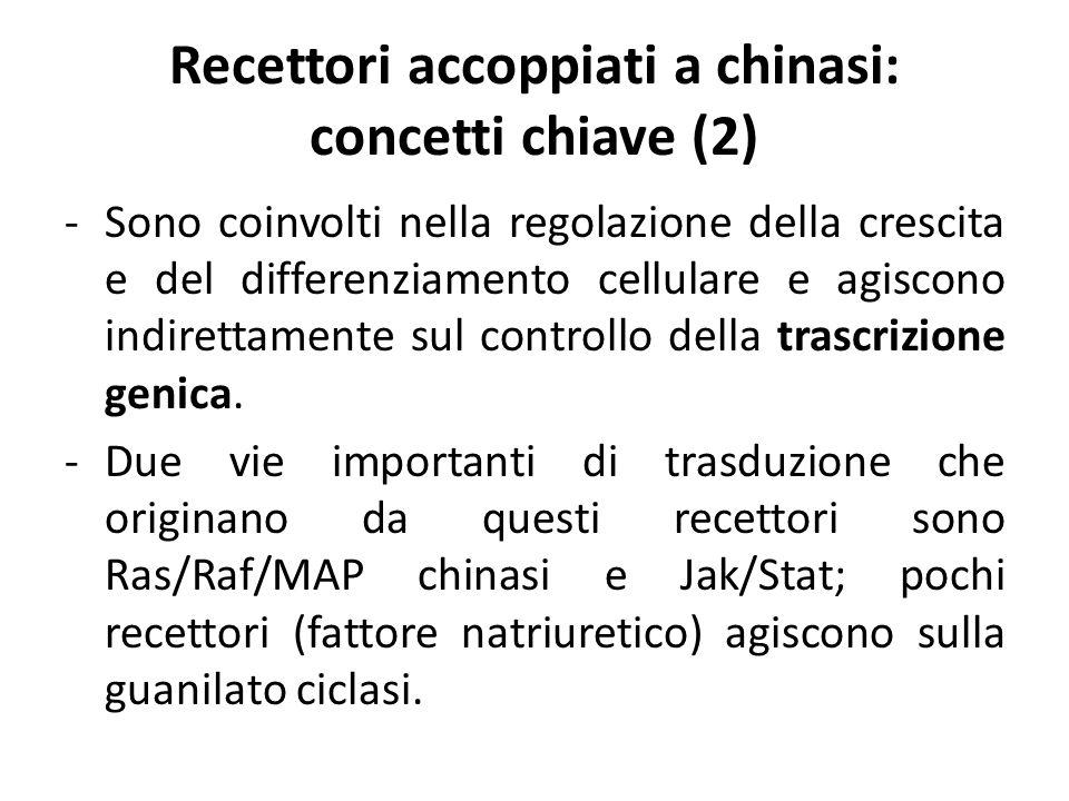 Recettori accoppiati a chinasi: concetti chiave (2) -Sono coinvolti nella regolazione della crescita e del differenziamento cellulare e agiscono indir