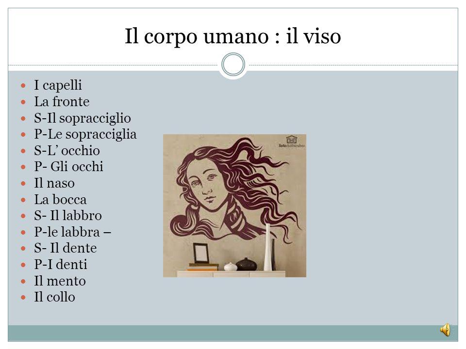 Italiano L2 Lezione 4 Il corpo umano