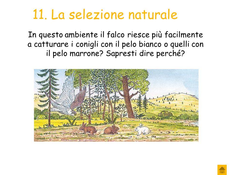 10. La selezione naturale In quell'ambiente vivono anche tanti altri animali che cercano, anch'essi, di sopravvivere utilizzandone le risorse: Tra que
