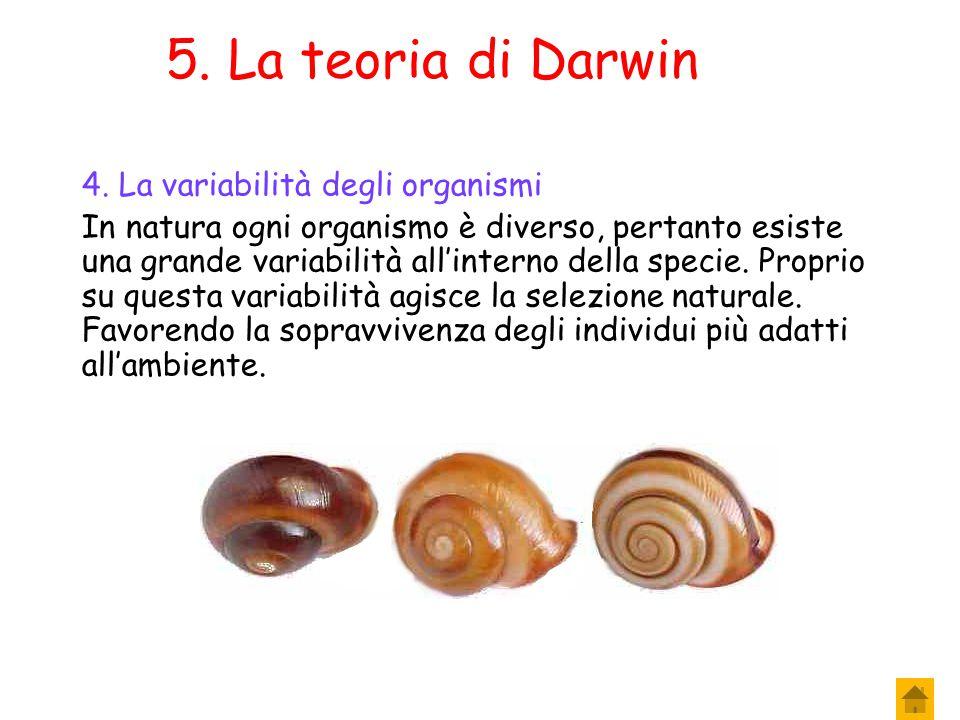 4. La teoria di Darwin 3. La selezione naturale Di conseguenza l'ambiente opera una selezione naturale, lasciando in vita gli organismi che meglio si