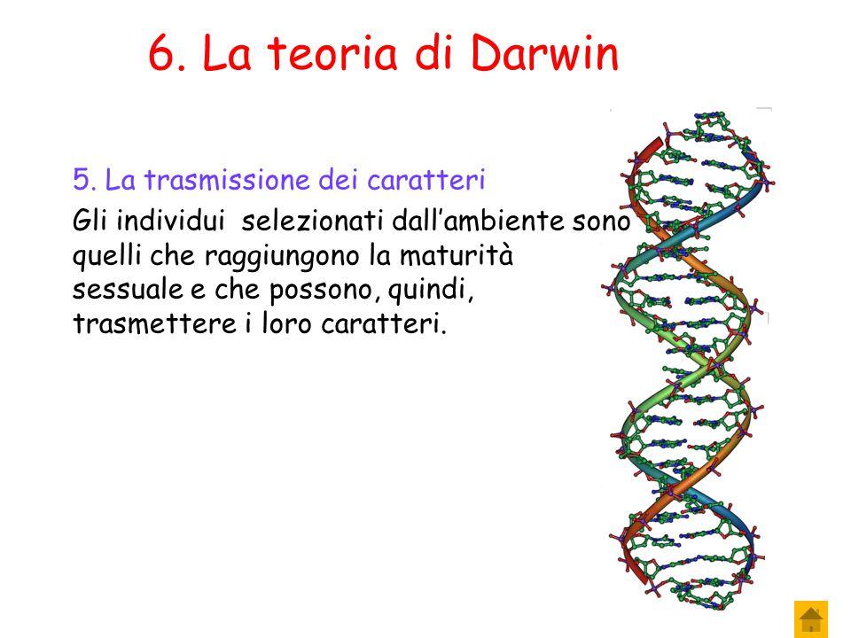 5.La teoria di Darwin 4.