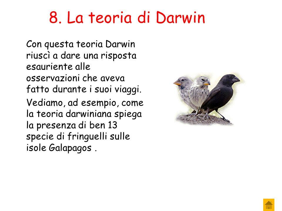 7. La teoria di Darwin 6. La formazione di nuove specie La comparsa, con il passare delle generazioni, di nuovi caratteri vantaggiosi e il loro accumu
