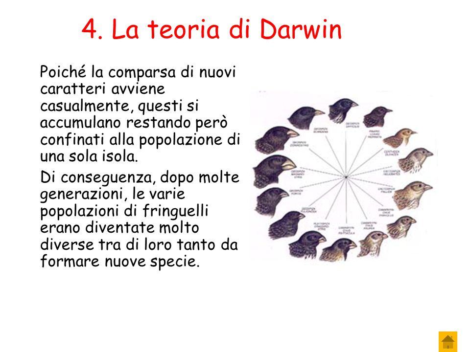 9. La teoria di Darwin L'arcipelago delle Galapagos si trova a circa 1000 Km dalle coste sudamericane. Inizialmente su un'isola dell'arcipelago arriva