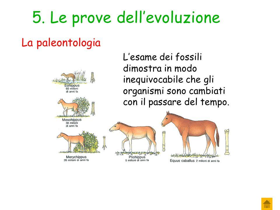 4.Le prove dell'evoluzione Tutti gli organismi (eccetto i virus) sono formati da cellule.