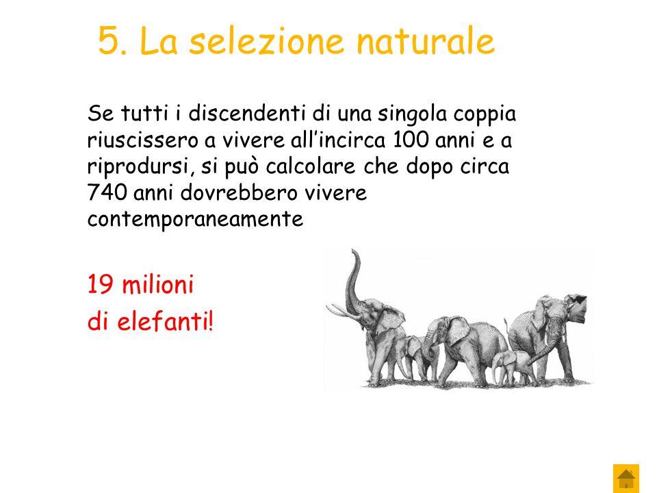 4. La selezione naturale A Darwin venne in mente che anche in natura le risorse naturali fossero sufficienti solo per un certo numero di organismi. Fa
