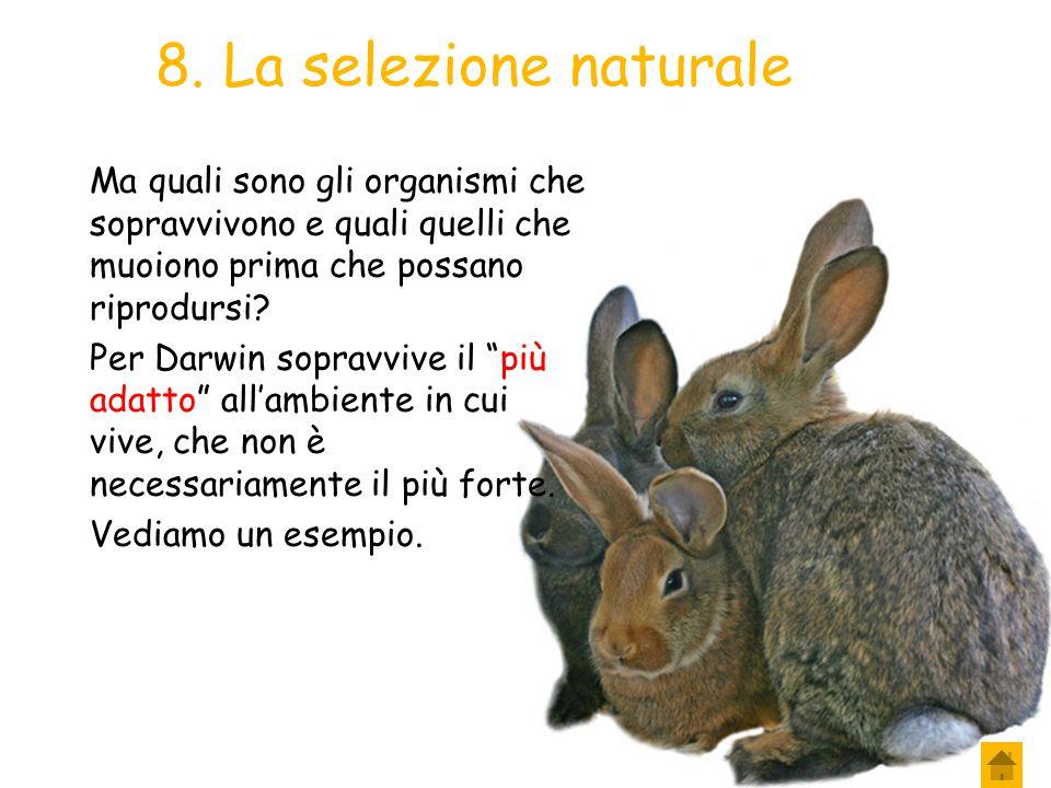 7. La selezione naturale Le risorse naturali disponibili sono insufficienti a soddisfare le esigenze di tutti gli organismi che nascono, perciò solo a