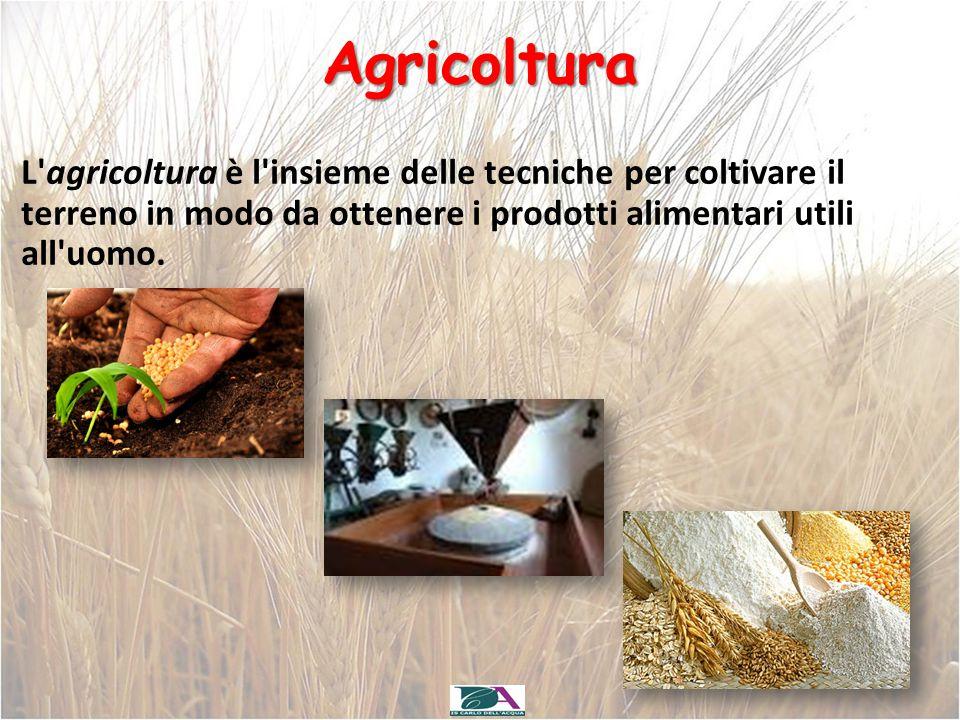 Agricoltura L'agricoltura è l'insieme delle tecniche per coltivare il terreno in modo da ottenere i prodotti alimentari utili all'uomo.