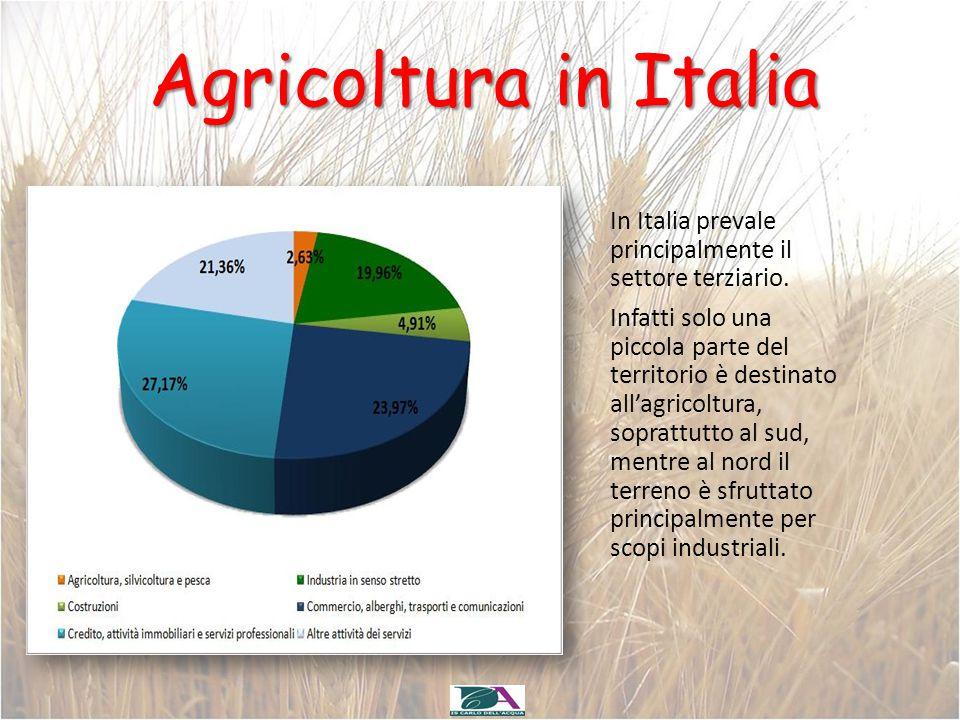 Agricoltura in Italia In Italia prevale principalmente il settore terziario. Infatti solo una piccola parte del territorio è destinato all'agricoltura