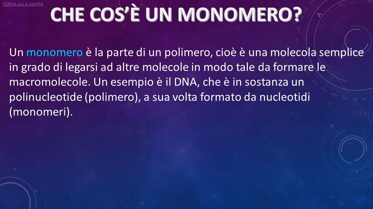 Un monomero è la parte di un polimero, cioè è una molecola semplice in grado di legarsi ad altre molecole in modo tale da formare le macromolecole. Un