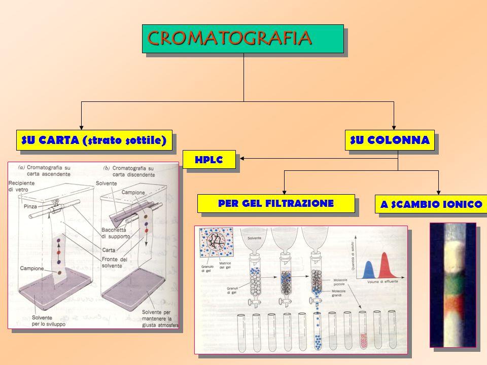 CROMATOGRAFIACROMATOGRAFIA A SCAMBIO IONICO SU CARTA (strato sottile) PER GEL FILTRAZIONE SU COLONNA HPLC