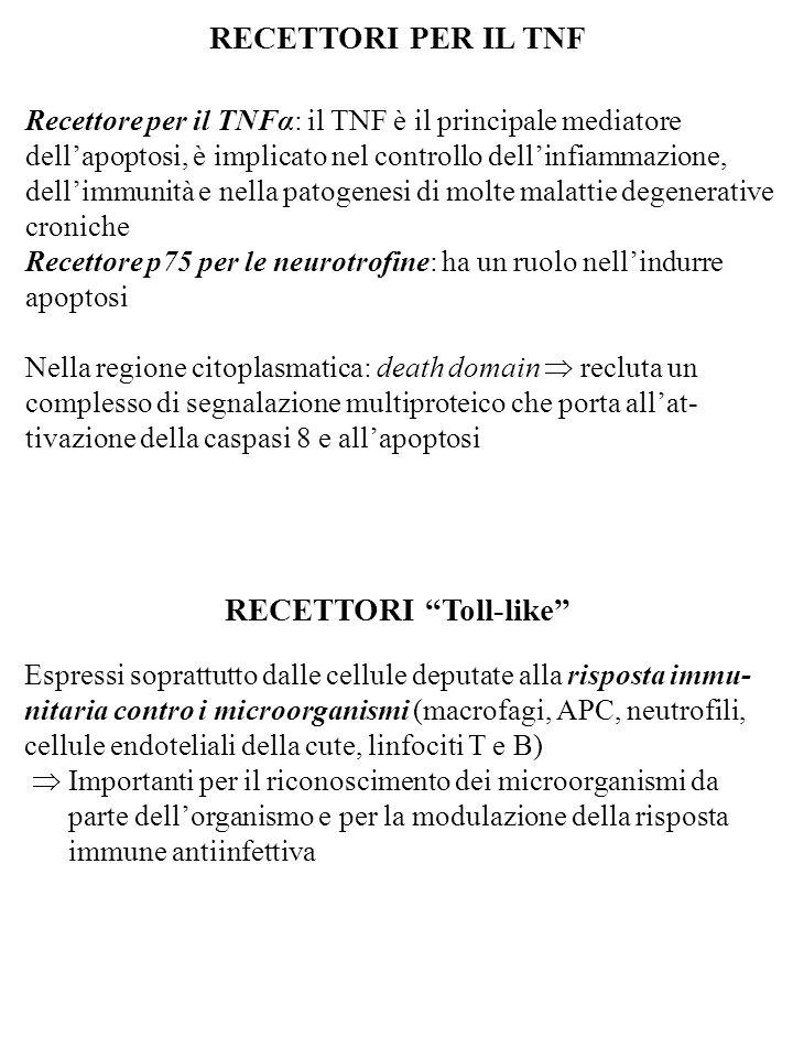 RECETTORI PER IL TNF Recettore per il TNFα: il TNF è il principale mediatore dell'apoptosi, è implicato nel controllo dell'infiammazione, dell'immunit