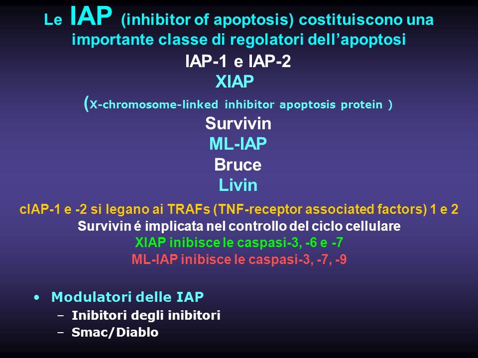 Le IAP (inhibitor of apoptosis) costituiscono una importante classe di regolatori dell'apoptosi cIAP-1 e -2 si legano ai TRAFs (TNF-receptor associate