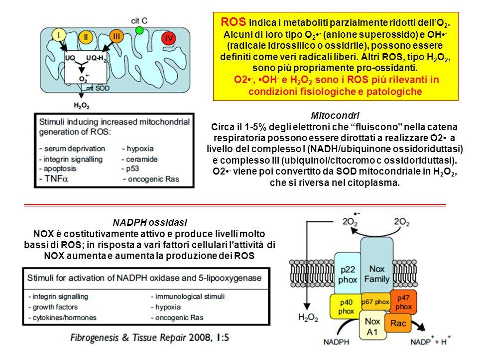 """Mitocondri Circa il 1-5% degli elettroni che """"fluiscono"""" nella catena respiratoria possono essere dirottati a realizzare O2 - a livello del complesso"""