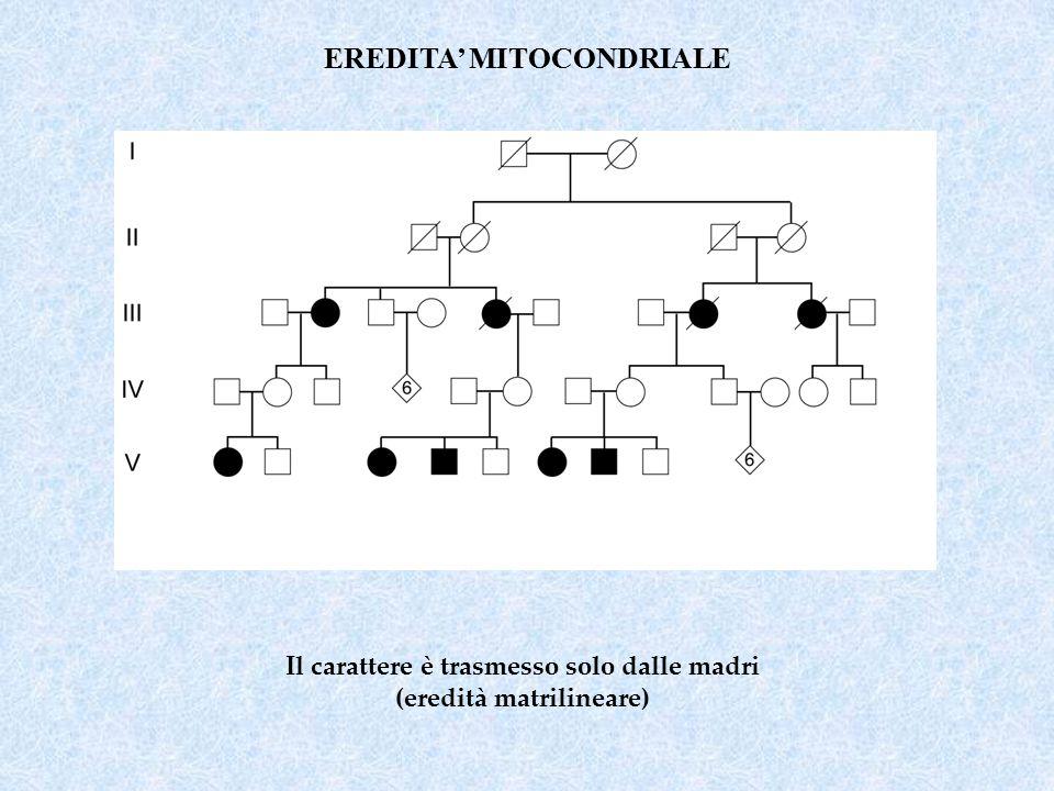 EREDITA' MITOCONDRIALE Il carattere è trasmesso solo dalle madri (eredità matrilineare)