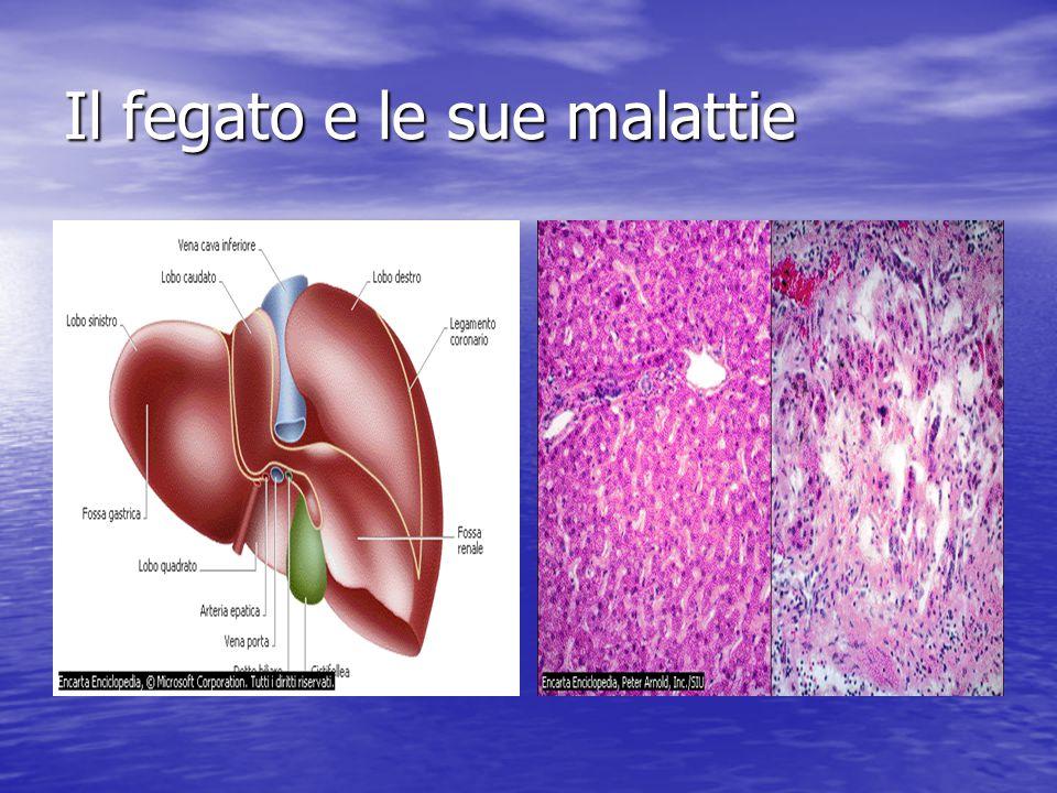 stomaco e pancreas stomaco e pancreas