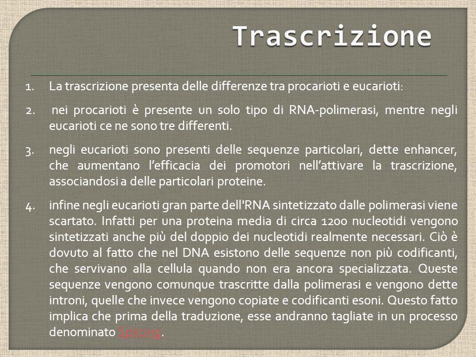 1.La trascrizione presenta delle differenze tra procarioti e eucarioti: 2.