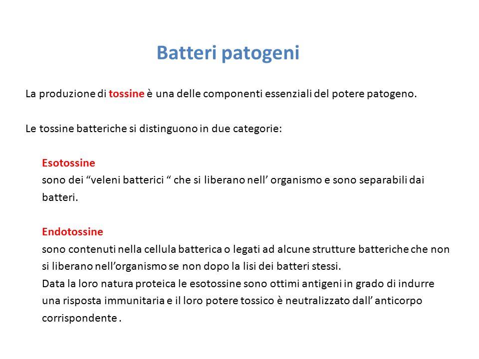 Batteri patogeni La produzione di tossine è una delle componenti essenziali del potere patogeno. Le tossine batteriche si distinguono in due categorie