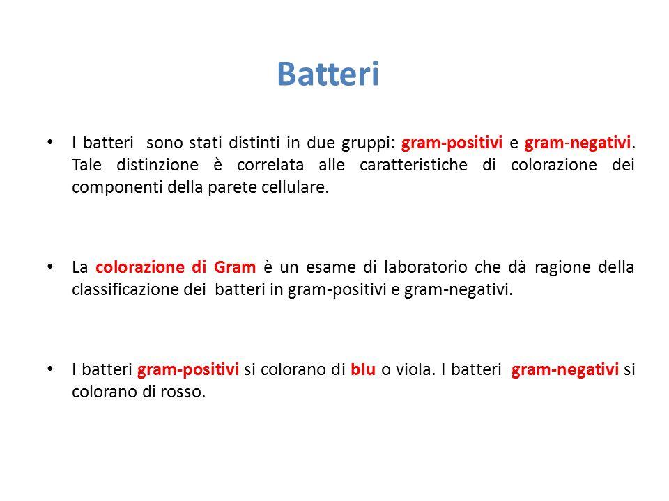 Batteri I batteri sono stati distinti in due gruppi: gram-positivi e gram-negativi. Tale distinzione è correlata alle caratteristiche di colorazione d