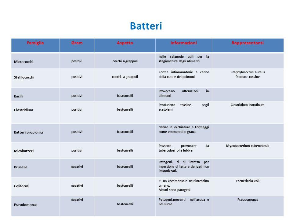 Batteri FamigliaGramAspettoInformazioniRappresentanti Micrococchi positivicocchi a grappoli nelle salamoie utili per la stagionatura degli alimenti St