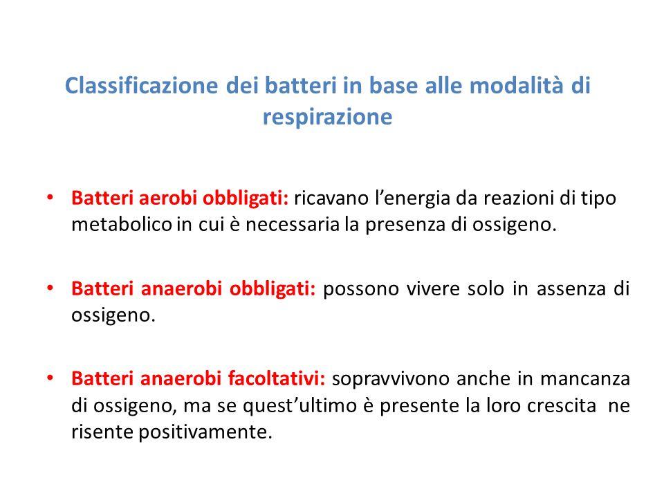 Classificazione dei batteri in base alle modalità di respirazione Batteri aerobi obbligati: ricavano l'energia da reazioni di tipo metabolico in cui è