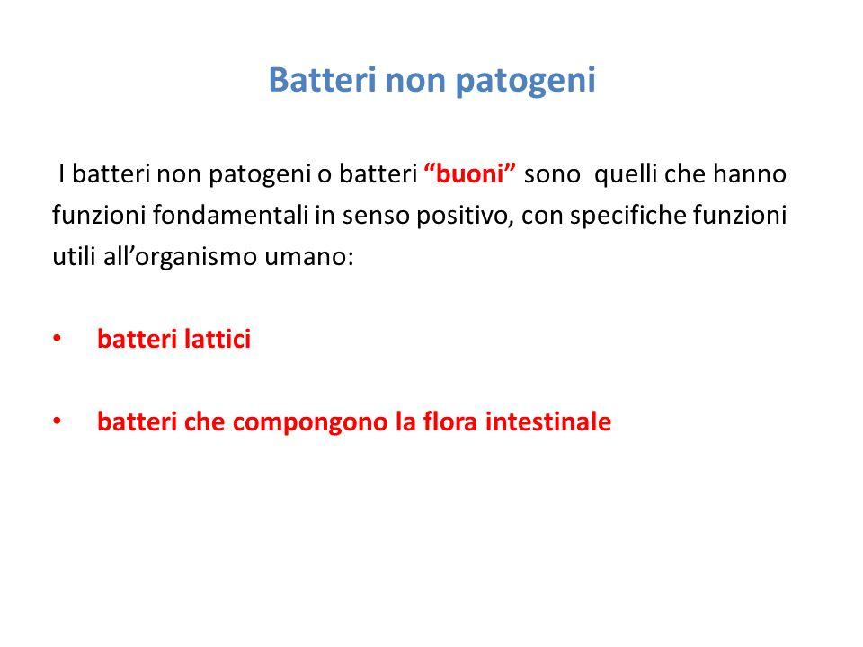 """Batteri non patogeni I batteri non patogeni o batteri """"buoni"""" sono quelli che hanno funzioni fondamentali in senso positivo, con specifiche funzioni u"""