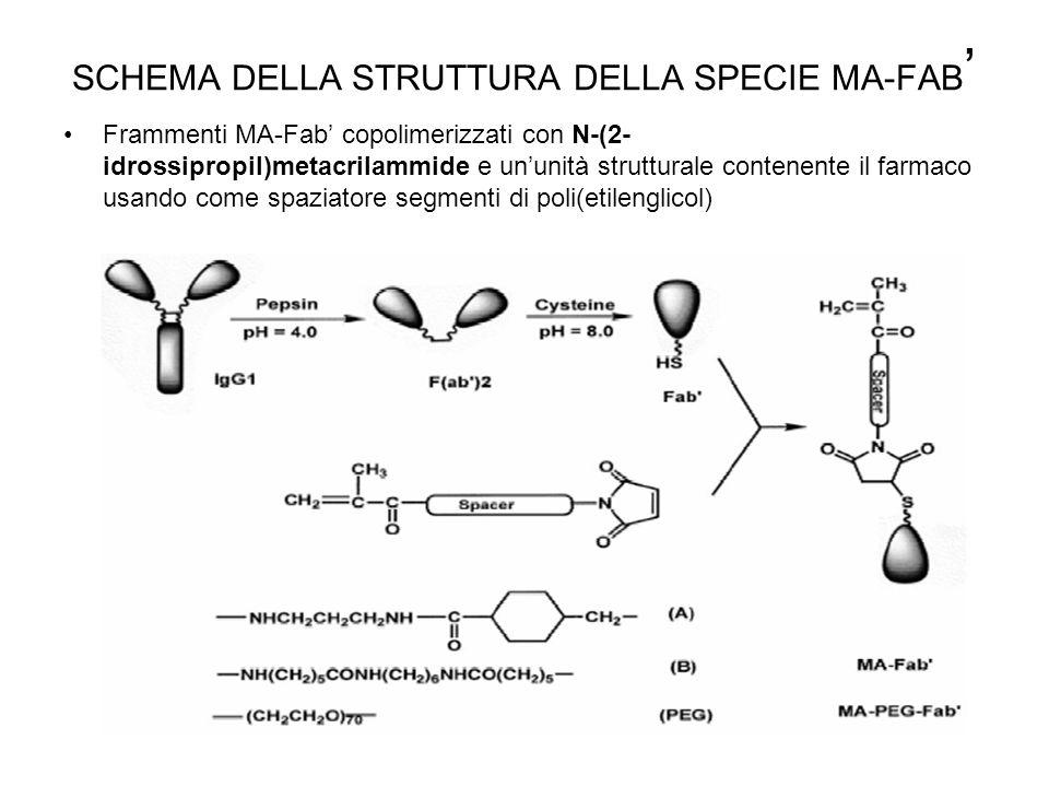 SCHEMA DELLA STRUTTURA DELLA SPECIE MA-FAB ' Frammenti MA-Fab' copolimerizzati con N-(2- idrossipropil)metacrilammide e un'unità strutturale contenent