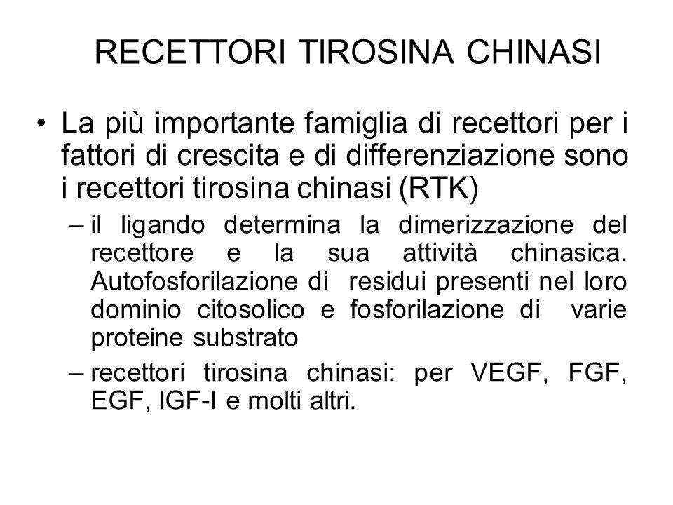 RECETTORI TIROSINA CHINASI La più importante famiglia di recettori per i fattori di crescita e di differenziazione sono i recettori tirosina chinasi (