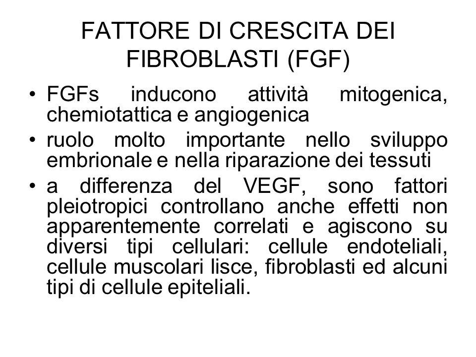FATTORE DI CRESCITA DEI FIBROBLASTI (FGF) FGFs inducono attività mitogenica, chemiotattica e angiogenica ruolo molto importante nello sviluppo embrion