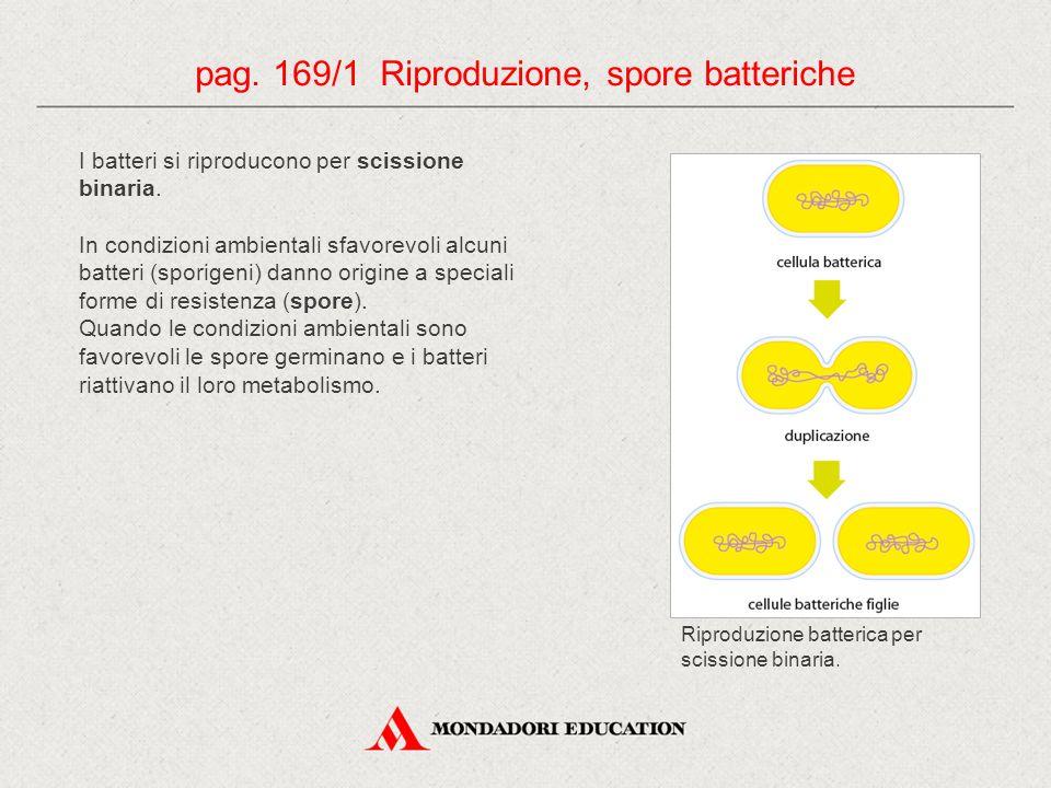 I batteri si riproducono per scissione binaria. In condizioni ambientali sfavorevoli alcuni batteri (sporigeni) danno origine a speciali forme di resi