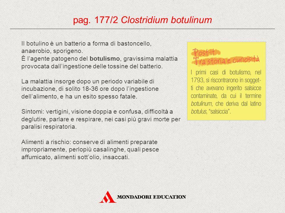 Il botulino è un batterio a forma di bastoncello, anaerobio, sporigeno. È l'agente patogeno del botulismo, gravissima malattia provocata dall'ingestio