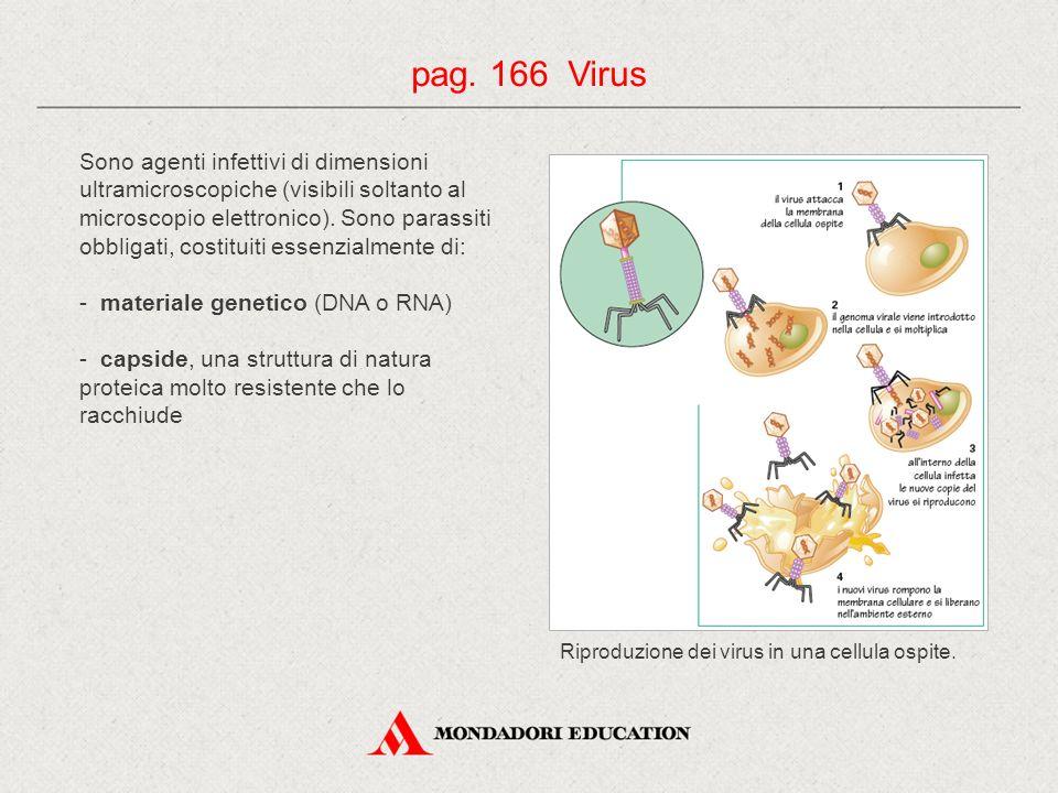 Sono agenti infettivi di dimensioni ultramicroscopiche (visibili soltanto al microscopio elettronico). Sono parassiti obbligati, costituiti essenzialm