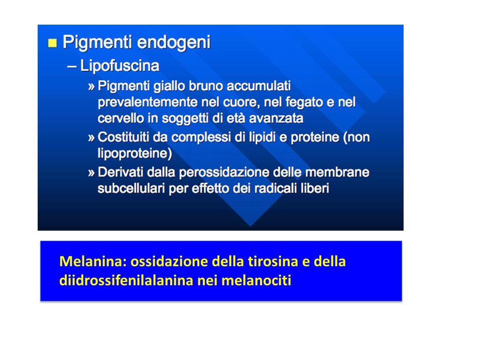 Melanina: ossidazione della tirosina e della diidrossifenilalanina nei melanociti